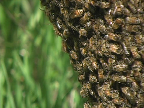 Bees swarm a beehive Stock Video Footage