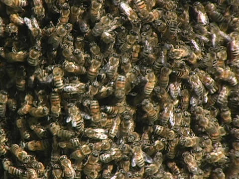 Bees swarm near a beehive Stock Video Footage