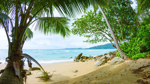 Tree Branches Swaying in Breeze on Tropical Beach Footage