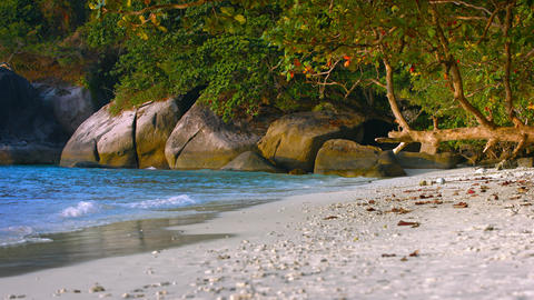 Natural Trees Provide Shade on a Tropical Beach Footage