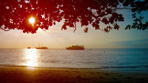 Late Afternoon Sun throught the Trees on a Tropical Beach Footage