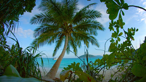 Tropical Beach from Behind Native Flora Footage