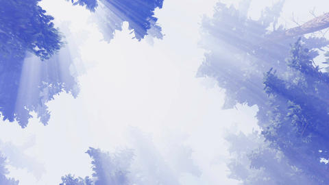 Hazy pine crowns and sunshine sky Footage