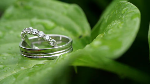 Wedding rings on a green wet leaf after rain. Wedding summer details and Live Action