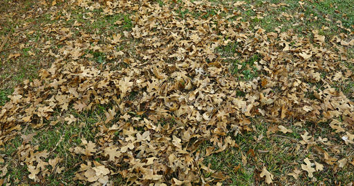 Blowing leaves with leaf blower Live Action