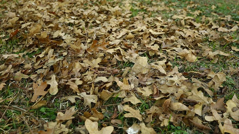 Leaves blowing Live Action