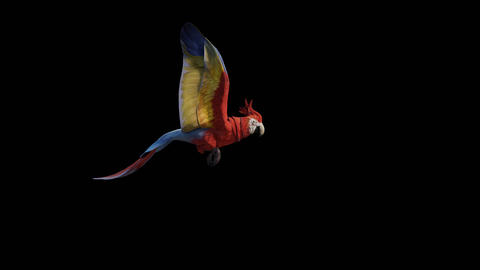 Parrot Flying Animation