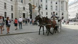 carriage horses in Michaelerplatz in Vienna Footage