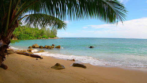 Waves of tropical sea water wash peacefully over a sandy beach. shaded by palms Footage