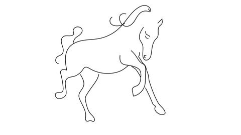 Reveal contour drawing horse Animation on white background Animation