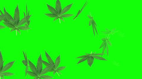animation of Marijuana Leaf on green screen Animation