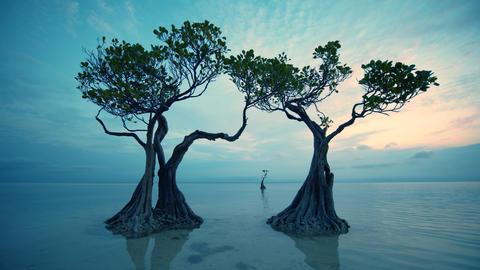 Beautiful dancing trees in Walakiri beach at sunrise clip 4K, Sumba, Indonesia Live Action