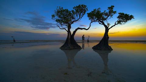 Tourist walking alone in Walakiri beach at sunrise,4K slow motion clip, Sumba, Indonesia Live Action