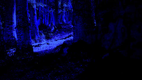 Scary Trees In The Woods, In The Dark. Horror Scene Animation