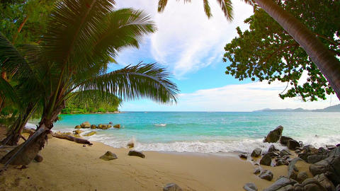 Beautiful. Tropical Beach with White Sand and Palm Trees Footage