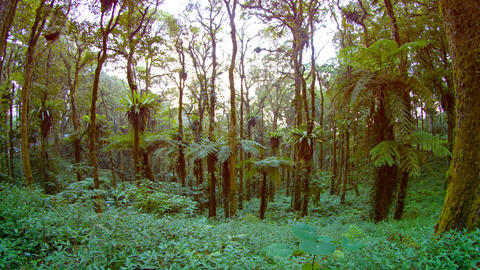 Tropical Plants and Trees in a Forested Wilderness Area. with Sound Footage