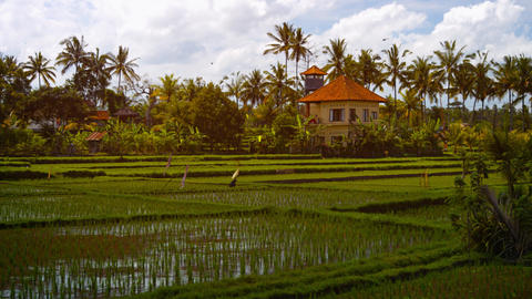 Modern House Stands over Lowland Rice Paddies in Bali. Indonesia Footage