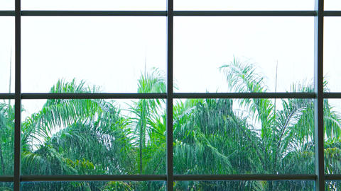 Tropical Rains Sheeting down a Big Window with Palm Trees Footage