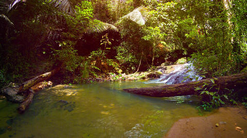 Tropical Waterfall Pours into natural Pool in Rainforest Wilderness. with Sound Footage