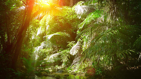 Sunshine Streaming through Palm Fronds over a Natural Tropical Stream Live Action