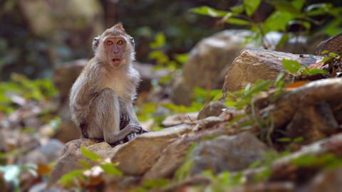 Cute Monkey Sitting on a Rock in a Nature Park Live Action