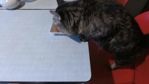Cat's Breakfast Stock Video Footage