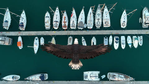 Close up of a bald eagle over yacht Live Action