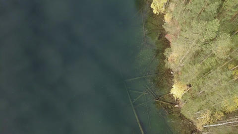 Aerial view following shoreline of a forest lake in autumn Live Action