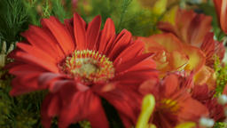 Close up of an assortment of colorful flowers in a bouquet Footage