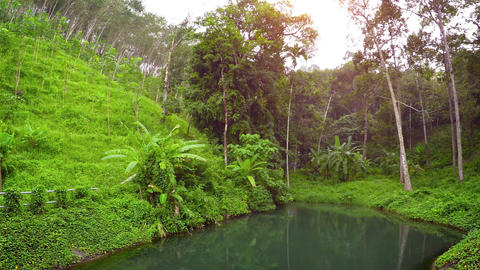 Tropical Nature Trail with Safety Railing beside natural Pond Footage