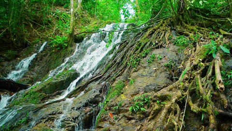 Tropical Waterfall Flowing over Rocks and amongst Tree Roots. with Sound Footage