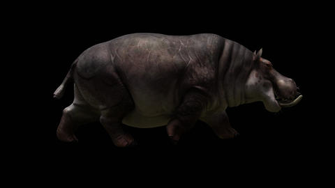 Hippopotamus Running GIF