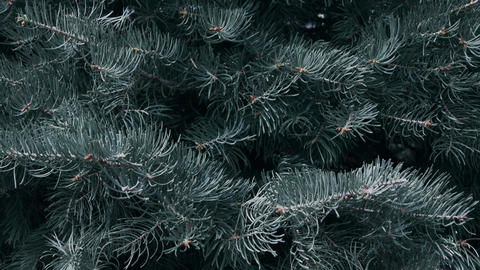 Closeup fir tree branches moving in slow motion. Macro of christmas tree Live Action