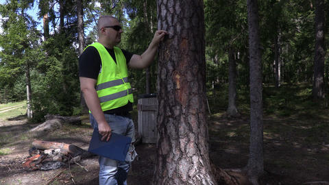 Environmental inspector trying to get out nail out of tree Footage