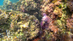 Colorful plants and fishes under water with sun in 4k Footage