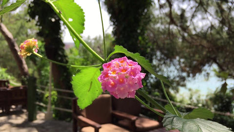 Pink Flower In Nature Live Action