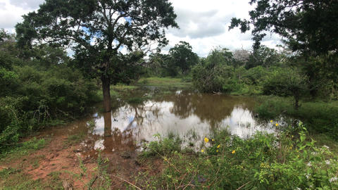 Yala, Sri Lanka, dirty lake in wild places Live Action