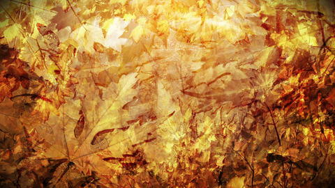 Autumn foliage background loop Animation