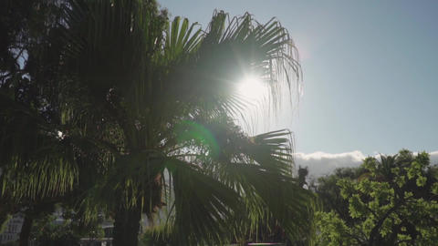 Palm tree covering the sun's rays Live Action