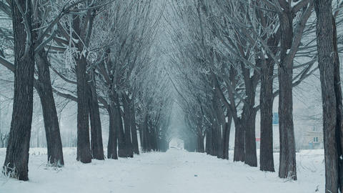 Beautiful tree alley and white snowfall in winter day. Winter landscape tree Live Action