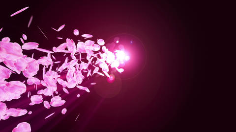 Spin of cherry blossoms,Spring,CG Animation,Loop Animation