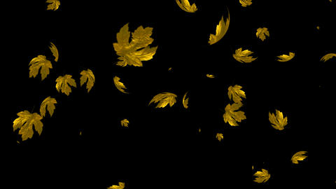 Looping Maple Leaves with Alpha Channel Stock Video Footage