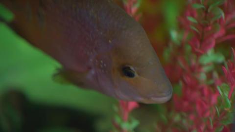 Beautiful aquarium fish. Aquarium with exotic fish against the background of Live Action