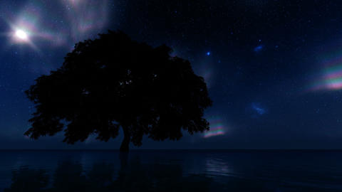 Single tree northern lights. Summer background. Galaxy, nebulae, stars. Northern Live Action