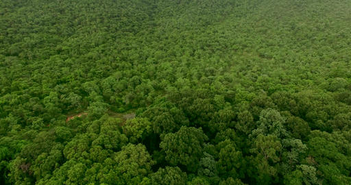aerial shot amazing green forest, Amazing landscape with mountains covered by green tropical forest Live Action
