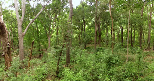Green Forest. Low drone flight over green forest movement Live Action