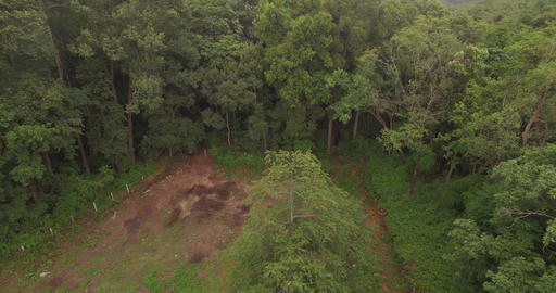 Aerial drone footage flying over a forest in morning sunlight. Drone filming straight down and Live Action