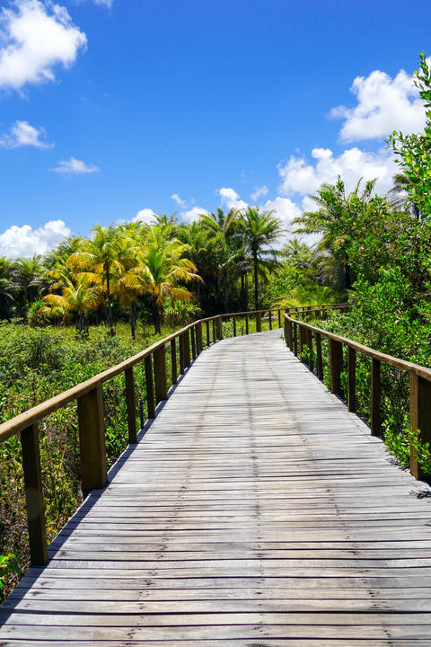 Wooded bridge over the tropical forest. Brazil Photo