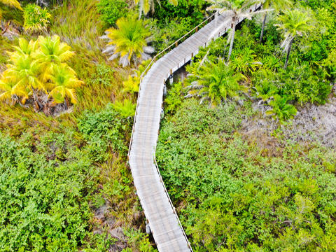 Aerial view of wooded bridge over the tropical forest. Brazil Photo
