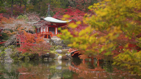 Daigo-ji temple with colorful maple trees in autumn, Kyoto, Japan Live Action